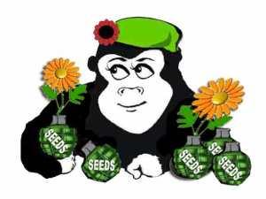 Guerilla Gardener Seed Bomb Recipe