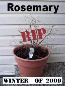 RIP_Rosemary_May2009