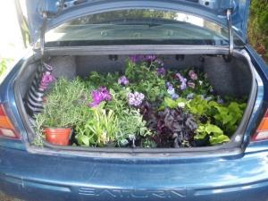 Guerilla Gardener Shopping Trip