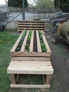 Pallet Garden Stage 1