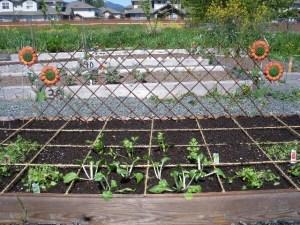 Ray's Sunshine Community Garden Plot - May 2013