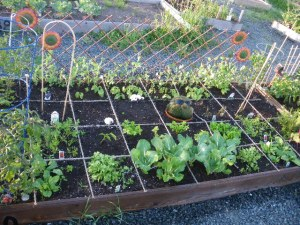 Ray's Sunshine Community Garden Plot - June 2013