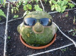 """Ray""""s 1st appearance at the Sunshine Community Garden"""