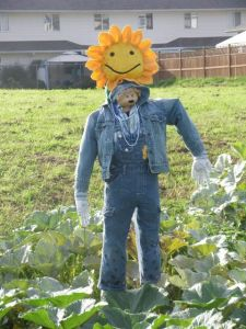 Scarecrow Contest 2013_Sunshine Man