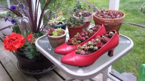 Red Shoe Planter