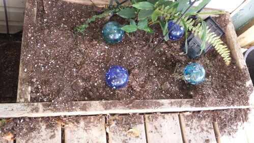 Spring_Bulbs_Misiing.jpg