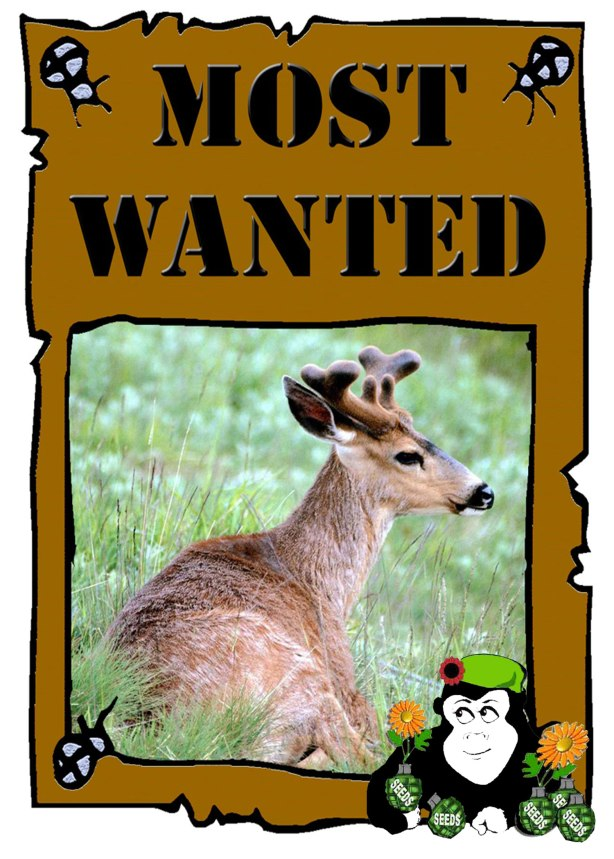 Deer_Wanted-Poster2015
